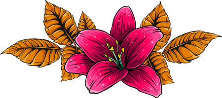 vector illustration of lily flower with leaves Vectores