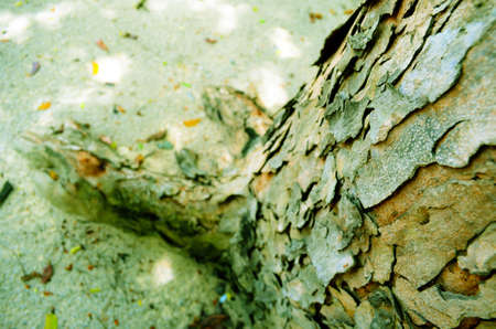 coate: closeup of trunk with cracked bark, background Stock Photo