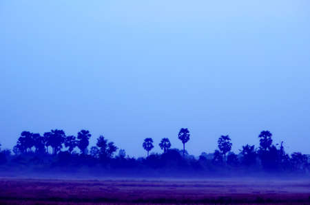 scene of field with mist at dawn before sun rise photo