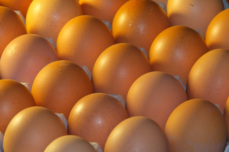 hatchery: eggs in the hatchery bay