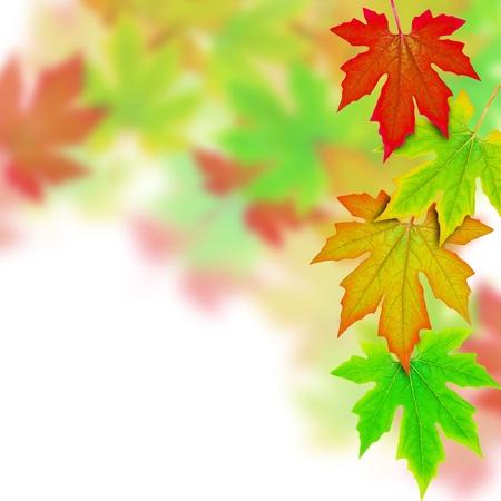 fresh Spring Autumn Leaves border  photo