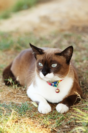lovely pretty brown and white cat  photo