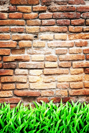 Old vintage wall and green grass Stock Photo - 9947460