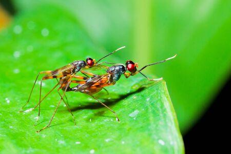 making love: dos insectos haciendo el amor