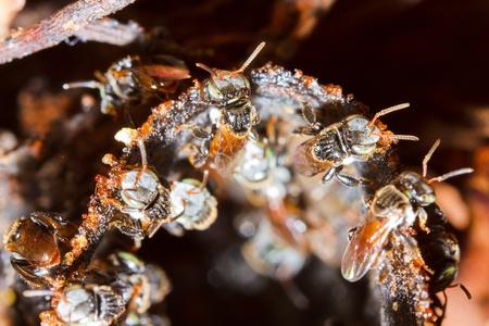 praiseworthy: working bee in the tree  Stock Photo