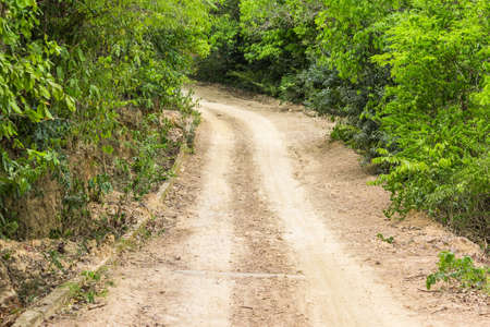 rough road: Rough gravel road passing through green forest