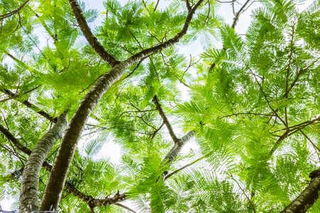 below: Tree ferns from below