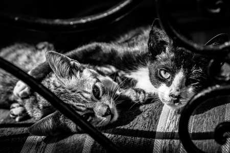 Two pet cats resting on the chair Stock Photo - 18762786