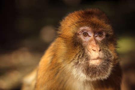 Wild monkey posing on a camera
