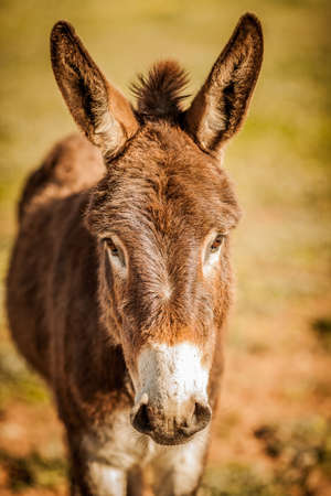 Donkey with his ears up Stock Photo