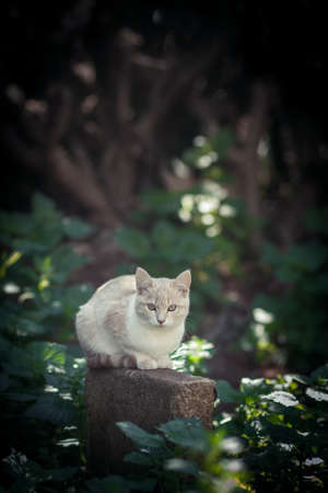 cautious: Cautious white cat in the forest