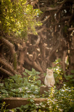 Lone white cat in the forest
