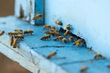 bees: Bee and beehive