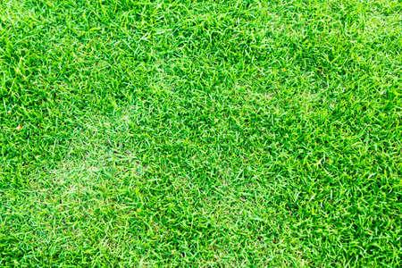 草のテクスチャ