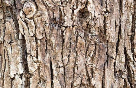 bark texture: Old bark texture