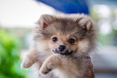 Retrato de perro pequeño mirando hacia arriba en la mano humana Foto de archivo