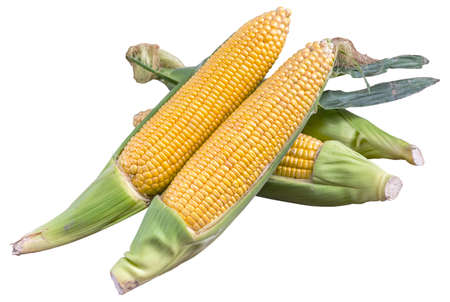 corn cob on white background with clipping path