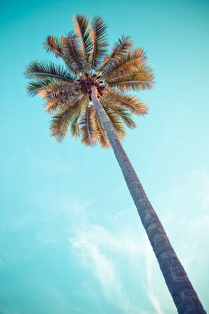 coconut tree with blue sky, vintage tone