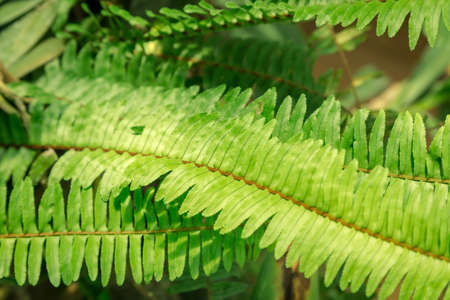 close up of fern leaf for background