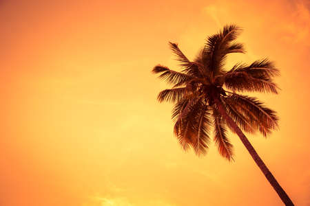 coconut tree in sunset for background