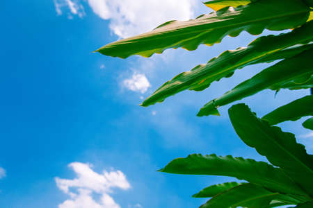 plant leaf and blue sky for background