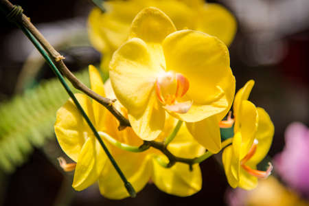 close up of yellow orchid flower
