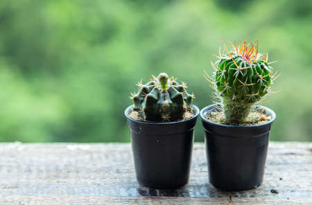 small pot of cactus on wood table with blur background 写真素材