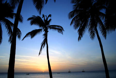Aruba Palms at Sunset, Caribbean Stock Photo