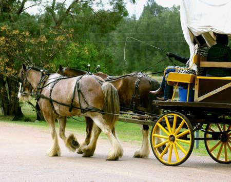 carreta madera: Caballo de vagones y el paseo, Hunter Valley, Australia