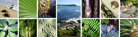 Collage of Tropical Images Stock Photo