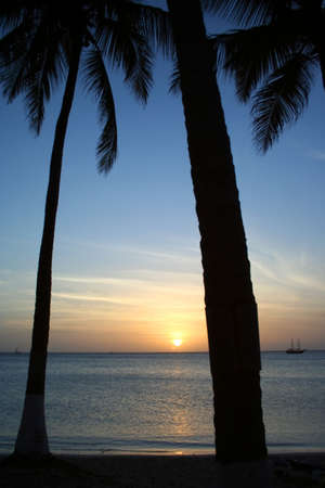 Palm silhouettes on Aruba Beach at sunset, Tropical Caribbean Island Stock Photo