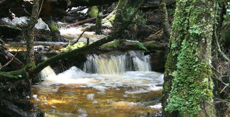 Rainforest Stream Wilderness World Heritage Area, Tasmania