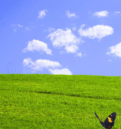 Butterfly resting on a green grassy hill background