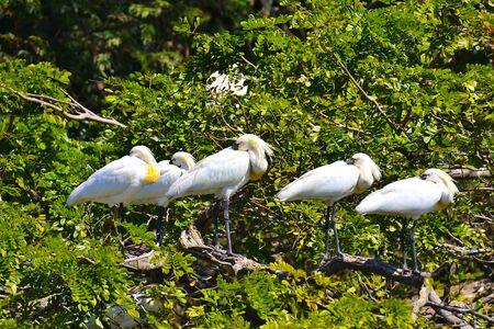 Les oiseaux synchronisés Banque d'images - 50527348