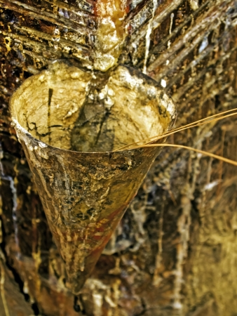 Collection of pine oil from the pine trees  photo