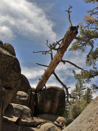 Fallen Tree Banco de Imagens