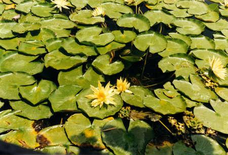 balboa: Balboa Park Lily Pond and Flowers