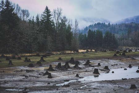 Mount Rainier Forest Stock Photo