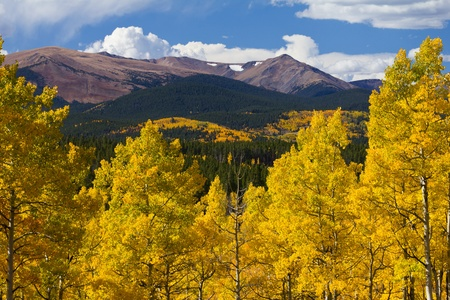 aspen leaf: Colorado Rocky Mountains and golden aspen trees in Fall. Stock Photo