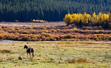 equinox: Lone horse grazes in a field in the Colorado Rocky Mountains. Stock Photo