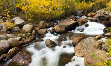 equinox: Yellow aspen leaves fall into a flowing stream in the Colorado Rocky Mountains.
