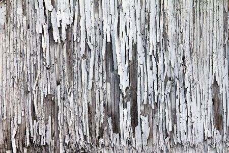 Texture of peeling paint on grungy old wood Stock Photo - 12432328