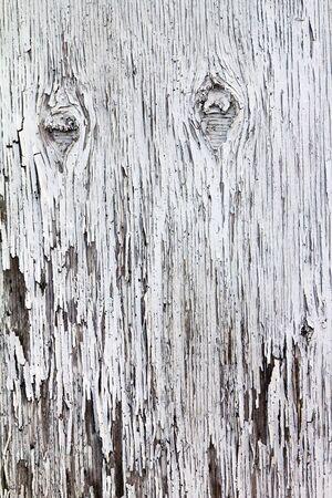 Texture of peeling paint on grungy old wood photo