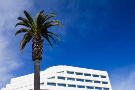 Palm tree and white office building against blue sky background photo