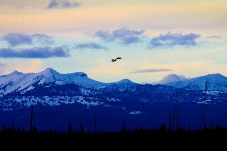 A soaring bald eagle casts an errie silhouette against the breathtaking backdrop of the snow capped mountains in Yellowstone National Park, Wyoming USA photo