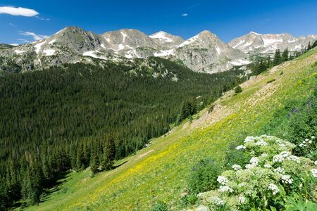 colorado landscape: Mountain wildflowers cover the Colorado landscape Stock Photo