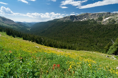 Wildflower Covered Mountain Landscape in Colorado photo
