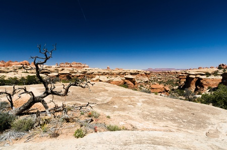 canyonland: Desert landscape scene in Canyonlands National Park, Utah USA Stock Photo
