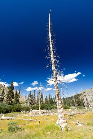 rebirth: Dead tree remains after mountain wildfire destroyed forest  Stock Photo