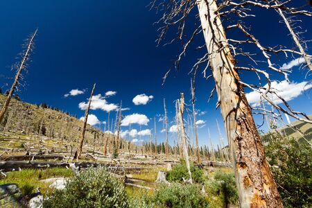 colorado rocky mountains: Forest fire leaves behind dead trees in the Colorado Rocky Mountains Stock Photo